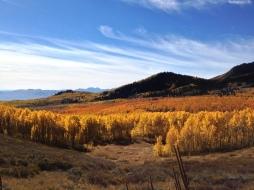 Fall colors at Guardsman Pass.