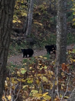 Ran into some baby bears!