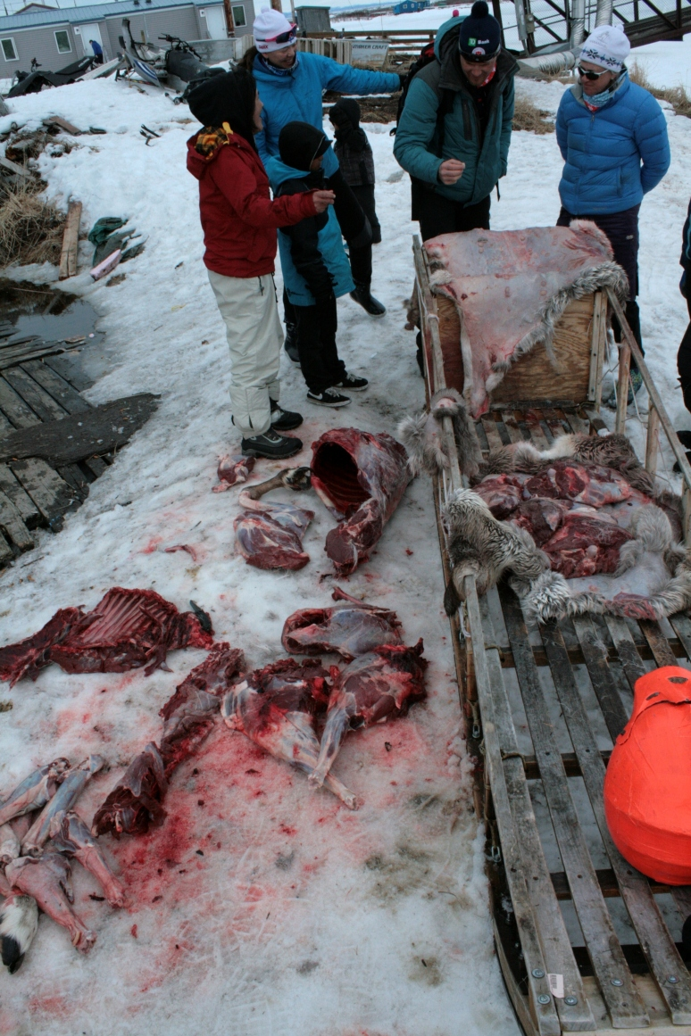 We watched a family butcher a caribou.